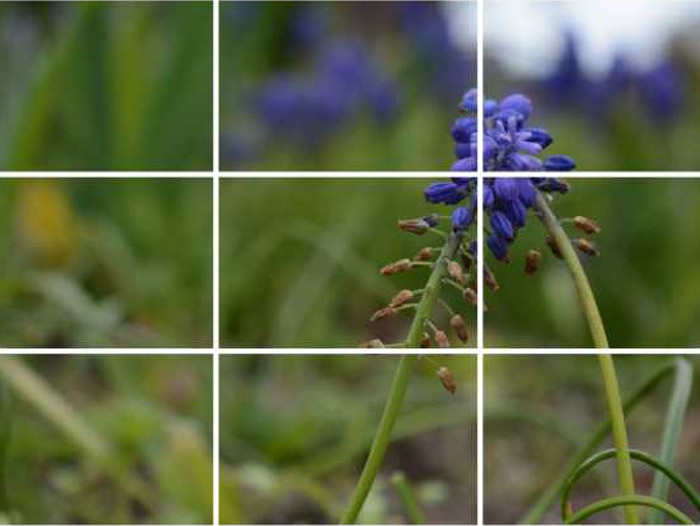 Rule of thirds Smartphone Photography