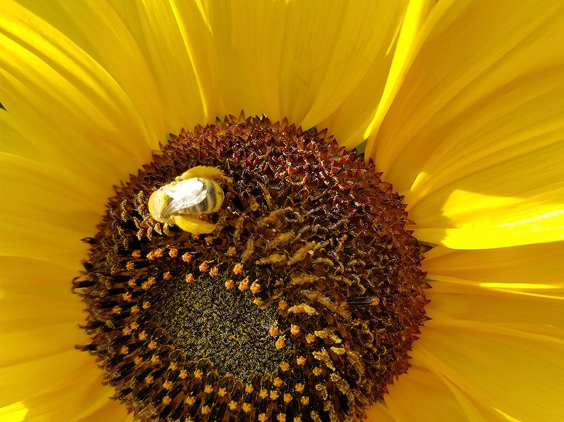 Closeup flower photography tips